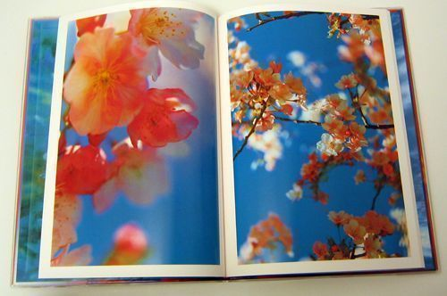 Acid Bloom. Mika Ninagawa.