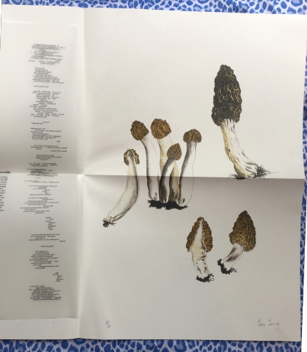 A Mycological Foray, Variations on Mushrooms. John Cage.