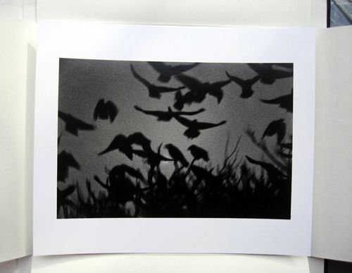 The Solitude of Ravens. Masahisa Fukase.